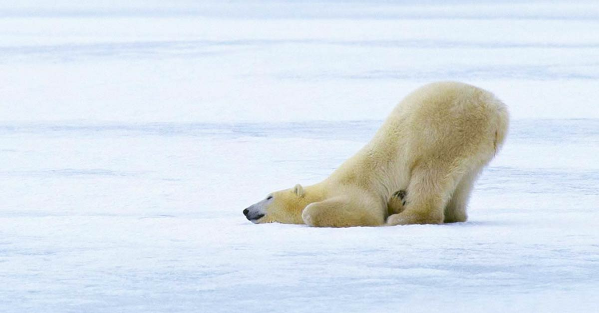 Stop Being a Lazy Polar Bear