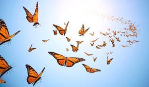 Anxiety Butterflies